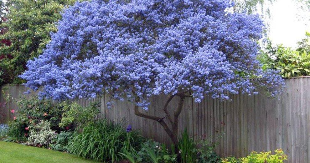 Zjawiskowe drzewo w ogrodzie for Arboles con flores para jardin